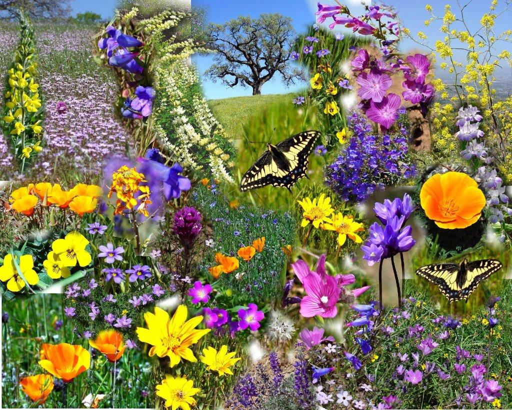 Spring flowers mandy eve barnetts official blog a mightylinksfo