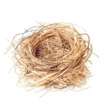12463871-empty-straw-nest-with-twigs-and-feathers-on-a-white-background