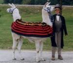 push_me_pull_you_llama