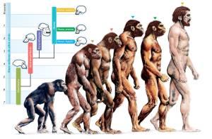 -evolution-of-humans