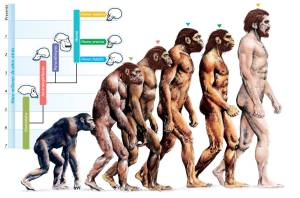 -evolution-of-humans
