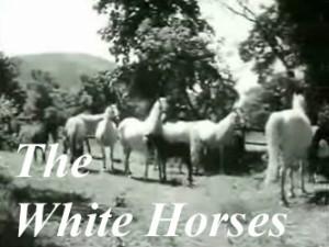 the-white-horses