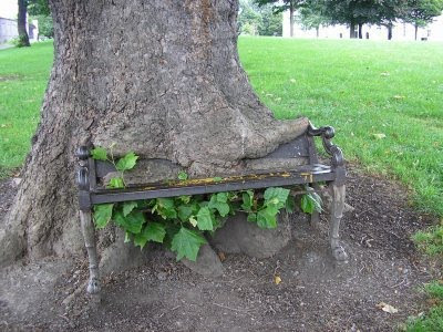 bench in tree