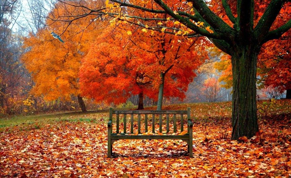 fall-bench
