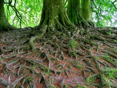 deech_roots